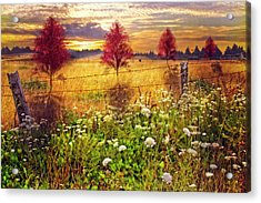 Sunset Shadows Acrylic Print by Debra and Dave Vanderlaan