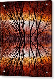 Sunset Tree Silhouette Abstract 2 Acrylic Print by James BO  Insogna