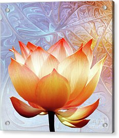 Sunshine Lotus Acrylic Print by Jacky Gerritsen