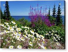 Superior Shores Flora Acrylic Print by Sandra Updyke