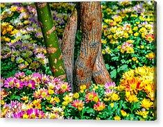 Surrounded Acrylic Print by Az Jackson