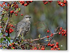 Surrounded By Berries Acrylic Print by Fraida Gutovich