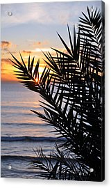 Swamis Palm Acrylic Print by Kelly Wade