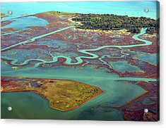 Swamp Area In Venice Acrylic Print by By LTCE