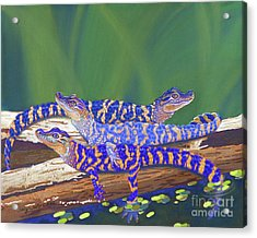 Swamp Babies Acrylic Print by Tracy L Teeter