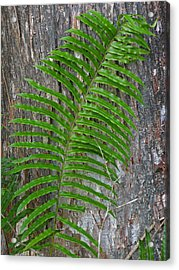 Swamp Fern Acrylic Print by Juergen Roth