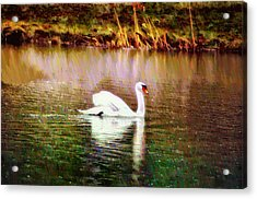 Swan Lake Acrylic Print by Bill Cannon