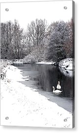 Swans In The Snow Acrylic Print by Gary Eason