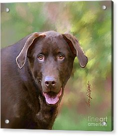 Sweet Molly Brown Acrylic Print by Bon Fillpot