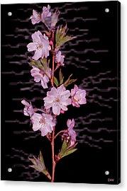 Sweet Smell Of Spring Acrylic Print by Debra     Vatalaro