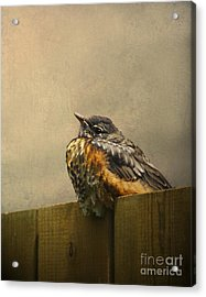Sweetly Sitting Acrylic Print by Jan Piller