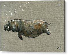 Swimming Hippo Acrylic Print by Juan  Bosco