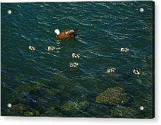 Swimming Lessons 2 Acrylic Print by Terry Perham