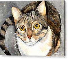 Tabby Cat Acrylic Print by Elaine Hodges