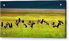 Take Off Acrylic Print by Leland D Howard