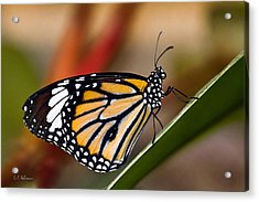 Taking A Break Acrylic Print by Christopher Holmes