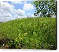 Tall Grass Hillside Acrylic Print by Scott Kingery