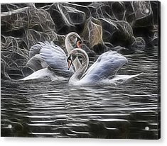 Tango Of The Swans Acrylic Print by Joachim G Pinkawa