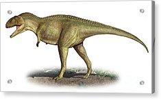 Tarascosaurus Salluvicus, A Prehistoric Acrylic Print by Sergey Krasovskiy