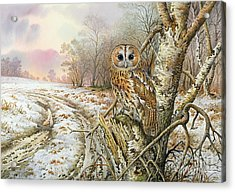 Tawny Owl Acrylic Print by Carl Donner