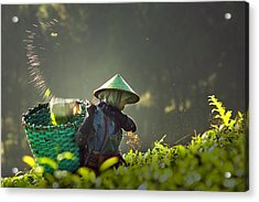 Tea Pickers Acrylic Print by Muhammad Raju