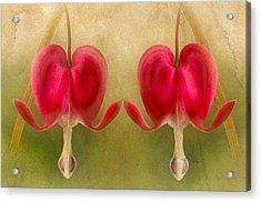 Teardrops Of The Heart Acrylic Print by Georgiana Romanovna