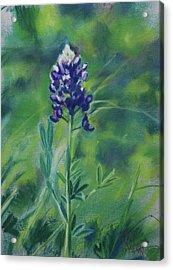 Texas Beauty Acrylic Print by Billie Colson