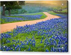 Texas Country Road Acrylic Print by Inge Johnsson