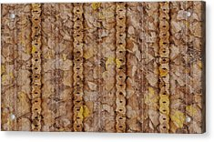 Textured Leaves Acrylic Print by Susan Kinney