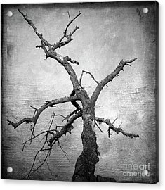 Textured Tree Acrylic Print by Bernard Jaubert
