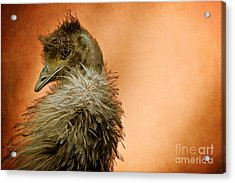That Shy Come-hither Stare Acrylic Print by Lois Bryan