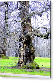 The Ancient Trees Of London Acrylic Print by Mindy Newman