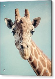 The Baby Giraffe Acrylic Print by Lisa Russo