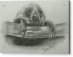 The Baby Sloth Acrylic Print by Terry Ganey
