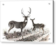 The Backroad Acrylic Print by Steve Maynard