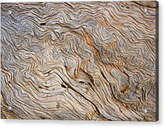 The Bark Of A Pine Is Sandblasted Acrylic Print by Taylor S. Kennedy