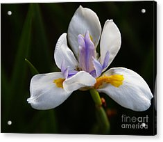 The Beckoning Acrylic Print by Linda Knorr Shafer