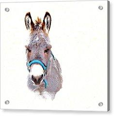 The Burro Acrylic Print by Robin Hewitt