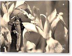 The Butterfly Acrylic Print by Donna Greene