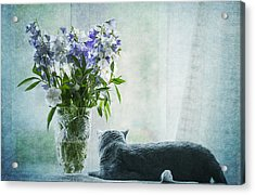 The Cat And The Vase Acrylic Print by Maggie Terlecki
