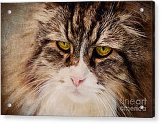 The Cat Acrylic Print by Angela Doelling AD DESIGN Photo and PhotoArt