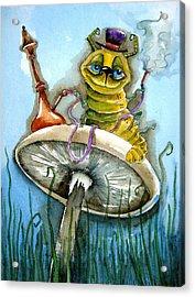 The Caterpillar Acrylic Print by Lucia Stewart