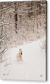 The Chase Acrylic Print by Cheryl Helms