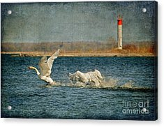 The Chase Is On Acrylic Print by Lois Bryan