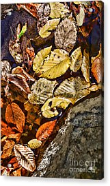 The Color Of Fall Acrylic Print by Paul Ward