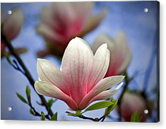 The Color Of Spring Acrylic Print by Evelina Kremsdorf