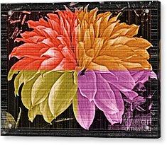 The Dahlia Acrylic Print by Gwyn Newcombe
