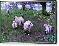 The Family Reunion Acrylic Print by Mindy Newman