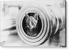 The Feline Mascot On Hmas Encounter During The First World War Acrylic Print by MotionAge Designs