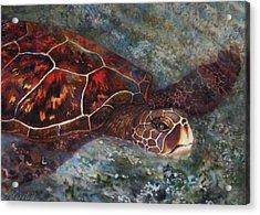 The First Honu Acrylic Print by Kerri Ligatich